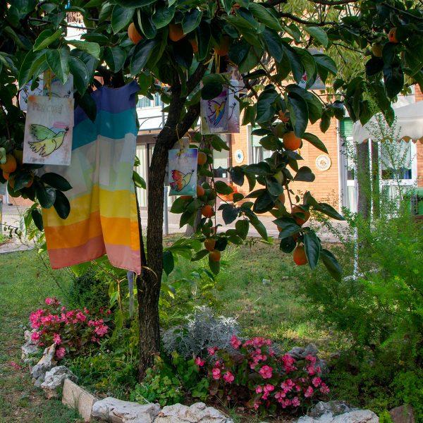 albero pace